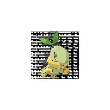Pokemon Turtwig Images | Pokemon Images